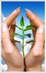 plante croissance.jpg